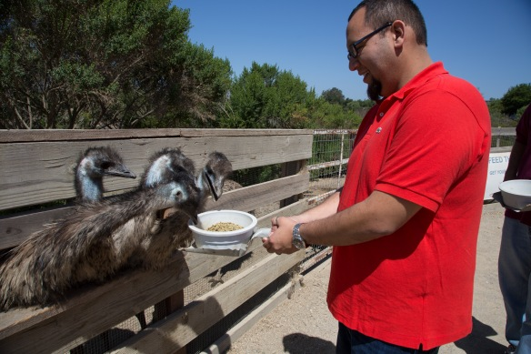 Bryan was feeding emus